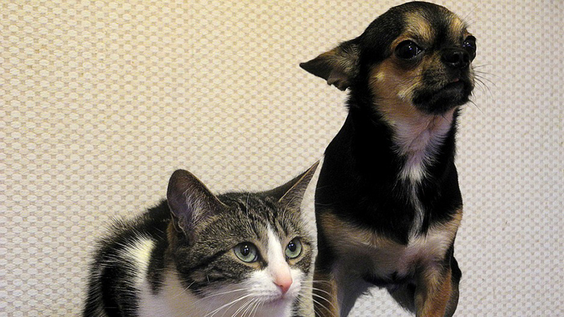 National Pet Day – What You Should Get Your Furry Friends on Their Special Day