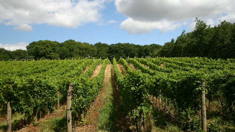 U.K. Wine Industry - Might Get a Boost From Warmer Climate